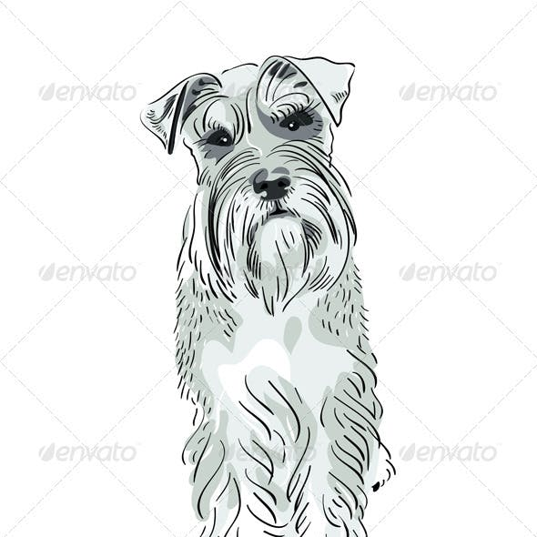 Vector Miniature Schnauzer dog serious salt-and-pe