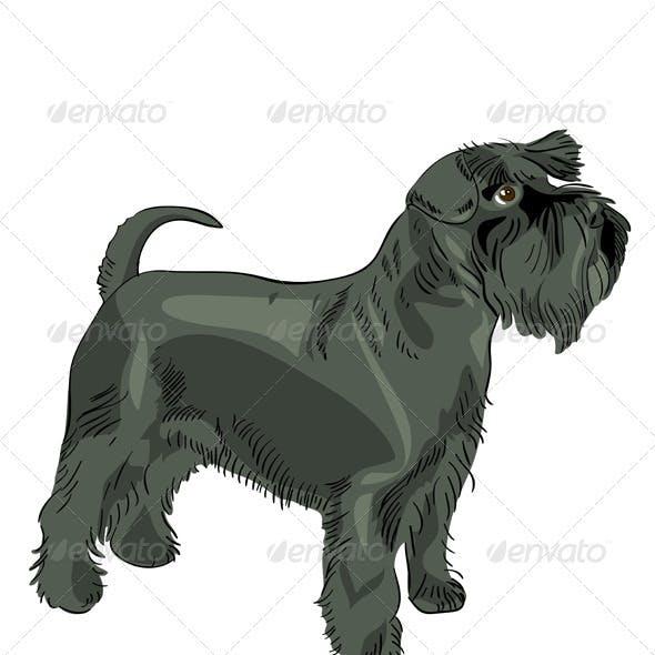 Vector black Miniature Schnauzer dog