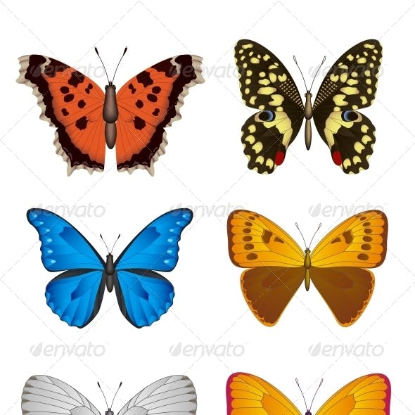 Set of Butterfly, Vector Illustration.