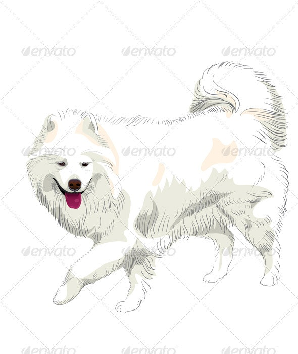 Vector purebred Samoyed dog smile - Animals Characters