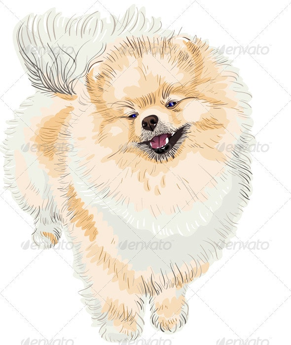 Spitz dog smiles - Animals Characters