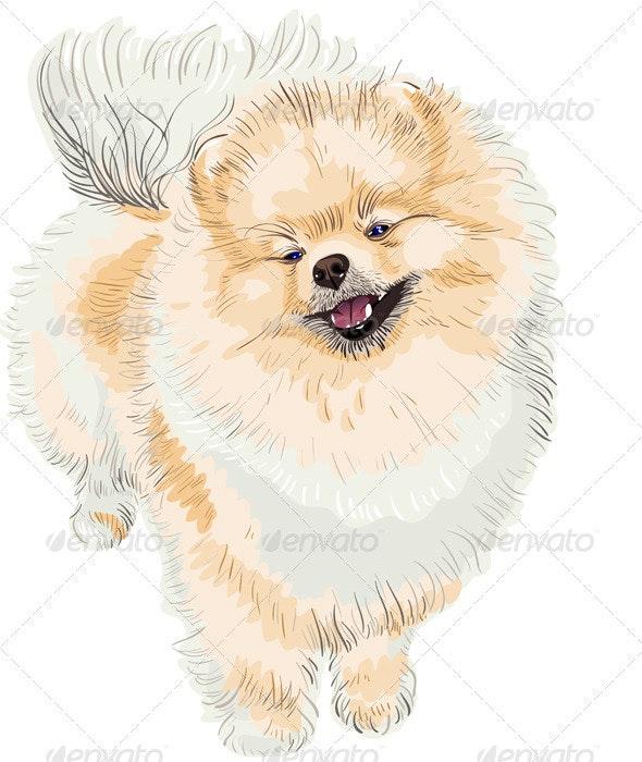 Spitz dog smiles - Animals Characters