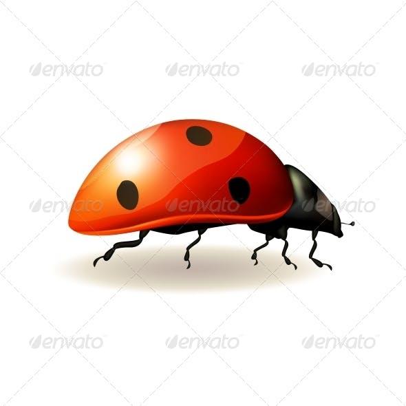 Ladybird. Vector Illustration.