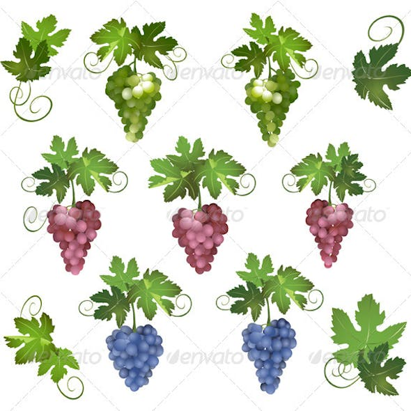 Set - vector different grapes with green leaves
