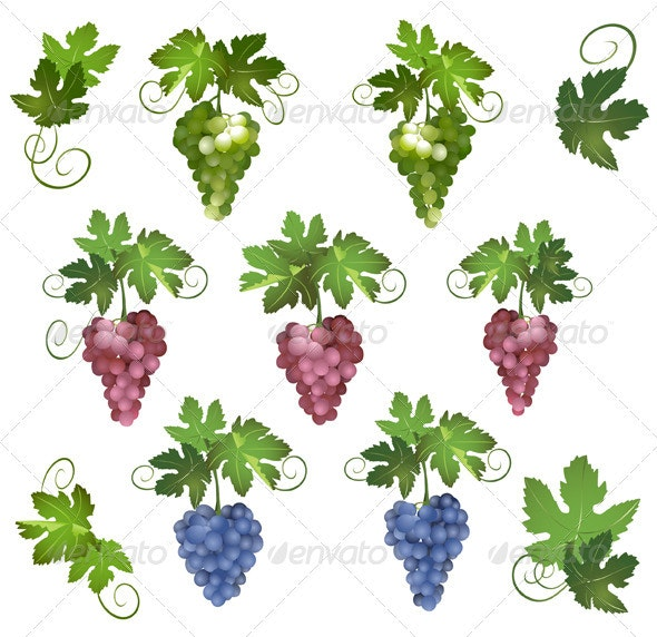 Set - vector different grapes with green leaves - Food Objects