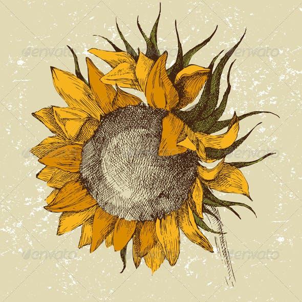 Hand Drawn Sunflower