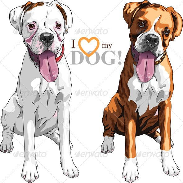 Vector Sketch of Dog Boxer breed