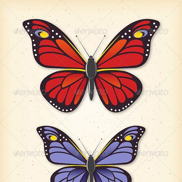 Summer Butterfly Vector Set