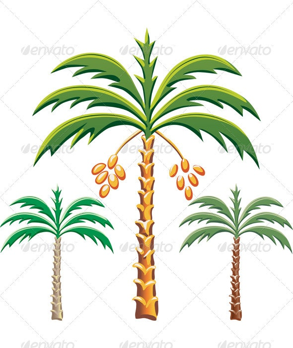 Vector three date palm trees  - Flowers & Plants Nature