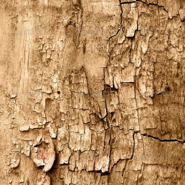 Texture of cracked wood