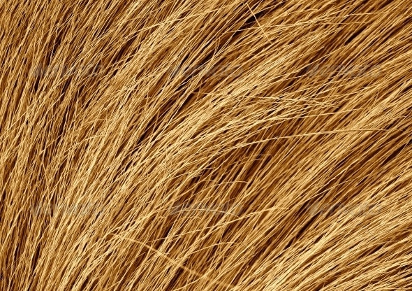 Grunge texture of the dry grass - Miscellaneous Textures