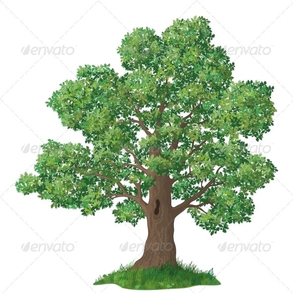 Oak Tree and Green Grass