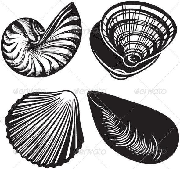 Seashells - Animals Characters