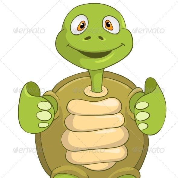 Turtle Funky