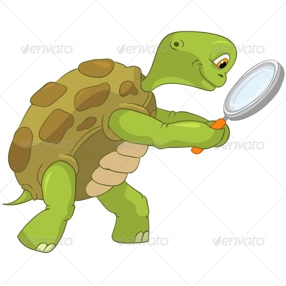 Turtle. Finding.