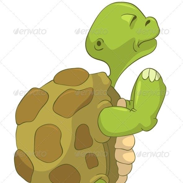Turtle. Pray.