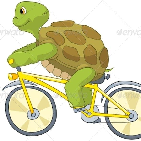 Turtle. Biker.