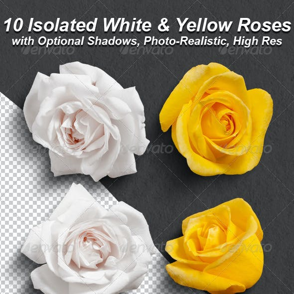 10 Photo-Realistic Isolated White and Yellow Roses