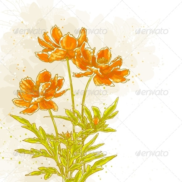 Cosmos Flowers on Textured Background - Flowers & Plants Nature