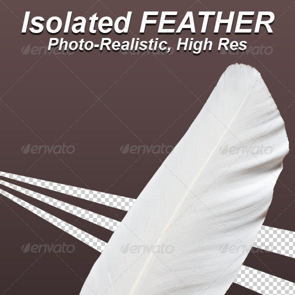 Photo-Realistic Isolated Feather