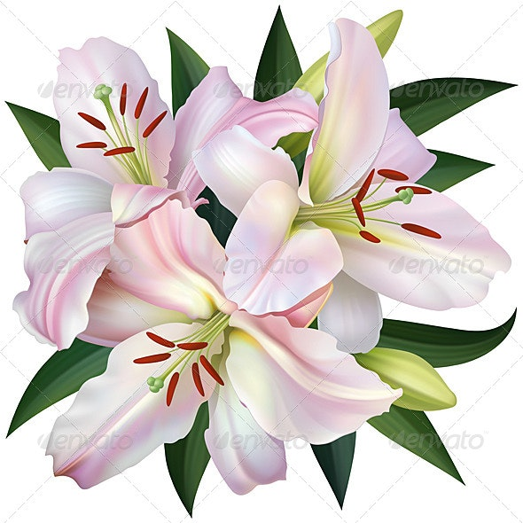 White Lily - Flowers & Plants Nature