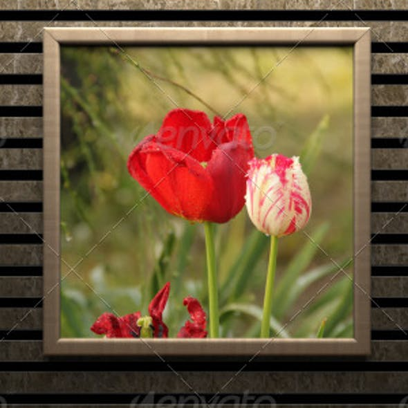 Picture Frame Set Pastel
