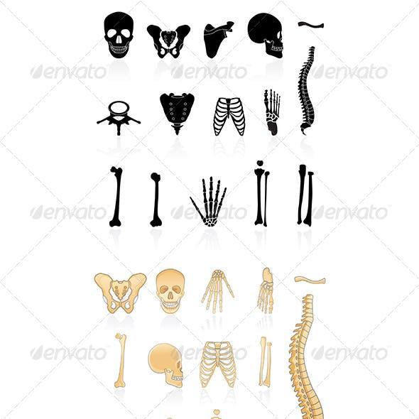 Set of Human Bones