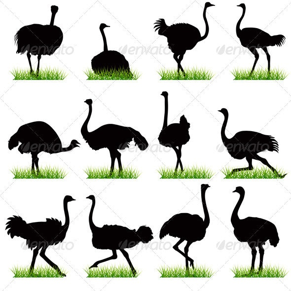 Ostrich Silhouettes Set - Animals Characters