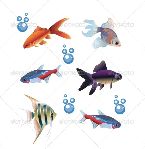 Six Separate Fishes