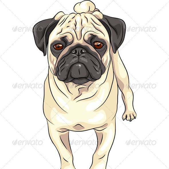 Vector Sketch Dog Pug Breed