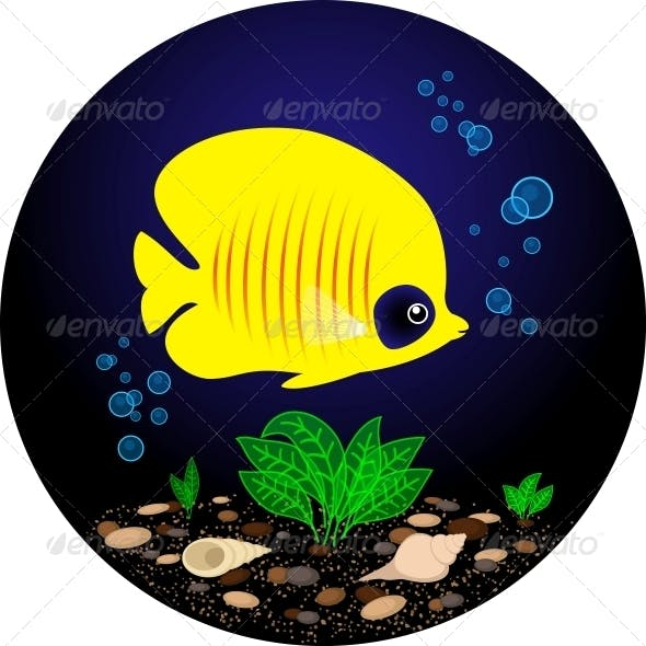 Tropical Yellow Fish is Swimming Under Water