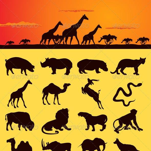 African animals2