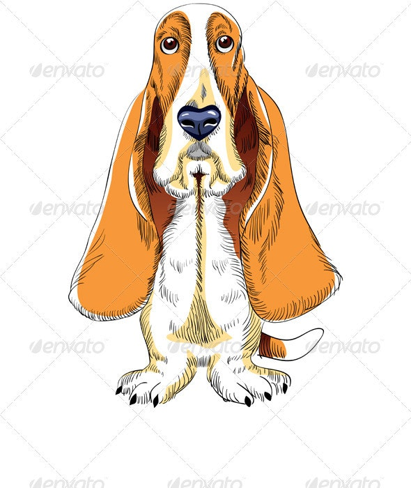 Dog Basset Hound breed - Animals Characters