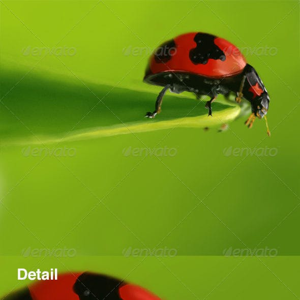Lady Bug - Digital Painting