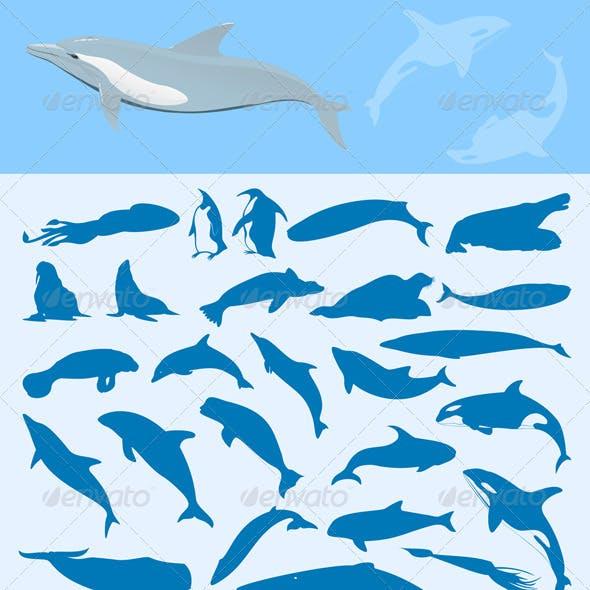 Sea mammals2