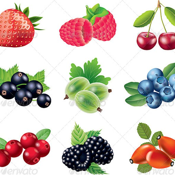 Popular Berries Vector Set