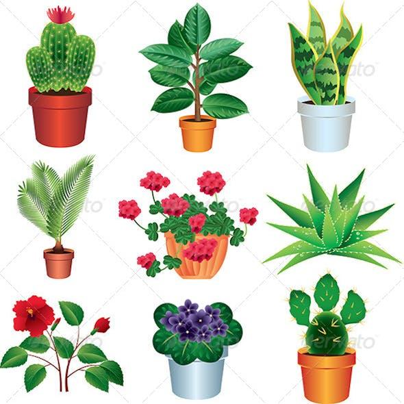 Home Plants Vector Set