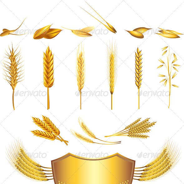 Wheat and Cereals Vector Set