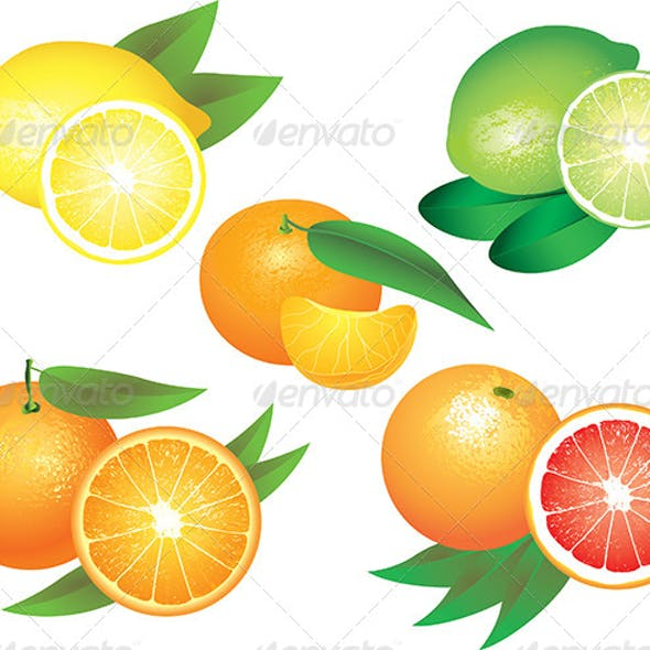 Citrus Fruits Vector Set