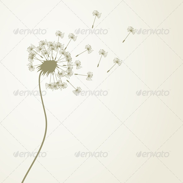 Dandelion - Flowers & Plants Nature