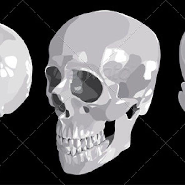 Three Individual Views of a Human Skull