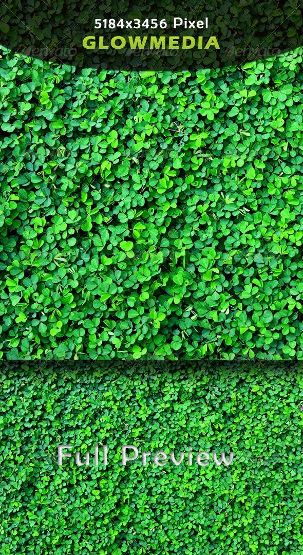 Grass - Nature Textures