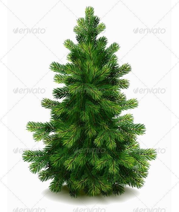Pine tree - Flowers & Plants Nature