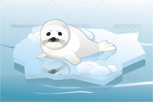 White Young Seal On Ice Floe. - Animals Characters