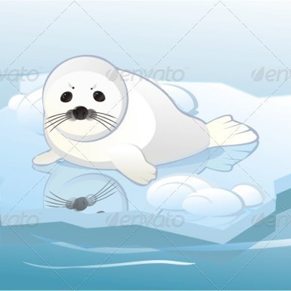 White Young Seal On Ice Floe.