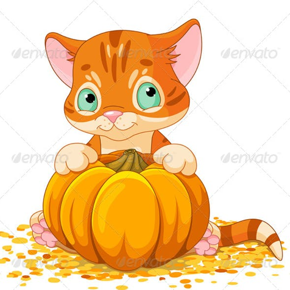 Harvest Kitten