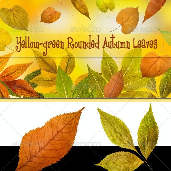 Yellow-green Rounded Autumn Leaves