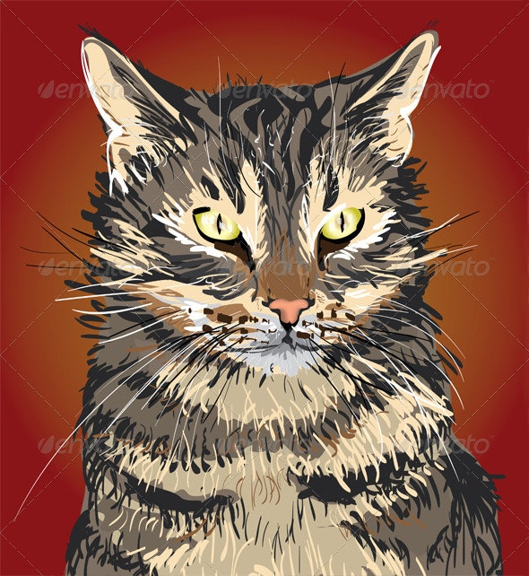 Illustrated cat - Animals Characters