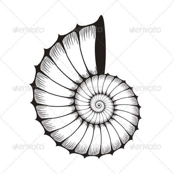 Sea Shell Clam