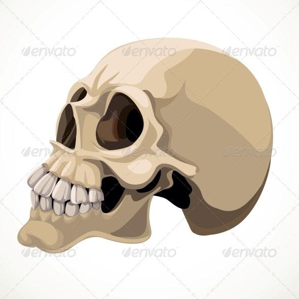 Skull Isolated on a White Background - Halloween Seasons/Holidays